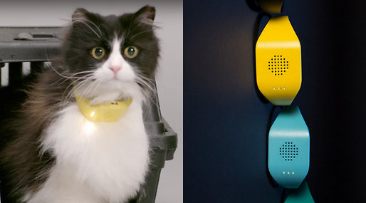 "Washington, D.C.— Presidential hopefuls Hillary Clinton and Donald Trump may soon be wearing collars that use the same technology as the ""Temptations Catterbox, a new device that translates a cat's meow into a human voice."