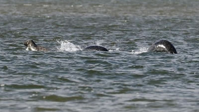 RIFLE, Colo. — A creature that looks a lot like the world famous Loch Ness Monster has been seen at Rifle Gap recently and several visitors have taken photos to prove it.